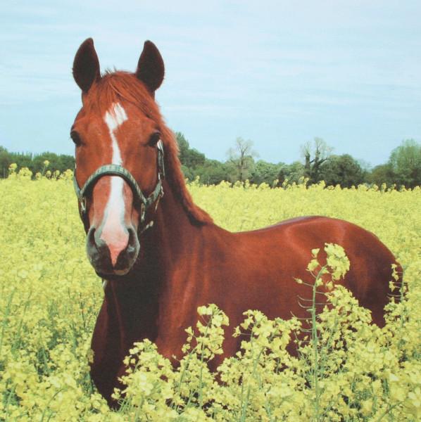 Microfasertuch mit Motiv Pferd im Rapsfeld